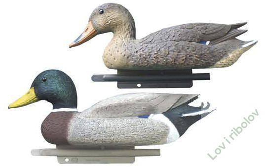 Loker divlja patka
